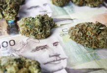 Kanada zarobiła 1100 mln USD na legalizacji marihuany