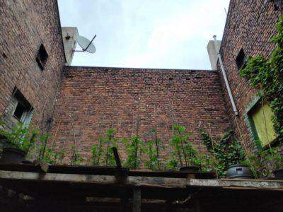 Policyjny dron wykrył plantację na dachu w jednego z budynków w Katowicach.