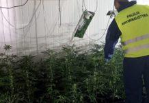 Mieszkaniec Rudy Śląskiej wynajął magazyn aby uprawiać w nim marihuanę.