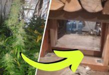 Plantacja marihuany w Świętokrzyskim w ukrytym pomieszczeniu. Przejście było ukryte w ścianie.