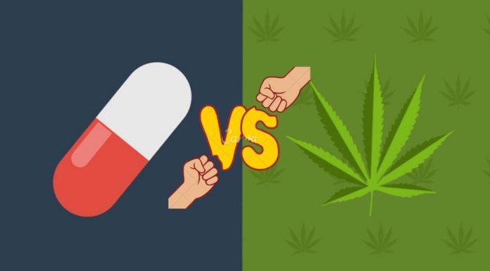 Marihuana zmniejsza liczbę zgonów spowodowanych opioidami