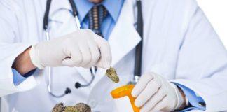 Medicana - lekarz marihuana medyczna