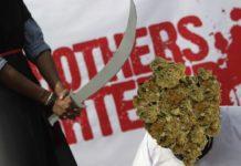 WeedWeek: kary za marihuane w arabii saudyjskiej. Mewa ratuje szweda przed więzieniem