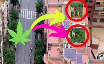 plantacja marihuany na dachu odkryta przez telewizyjny helikopter podczas wyscigu vuelta a espana