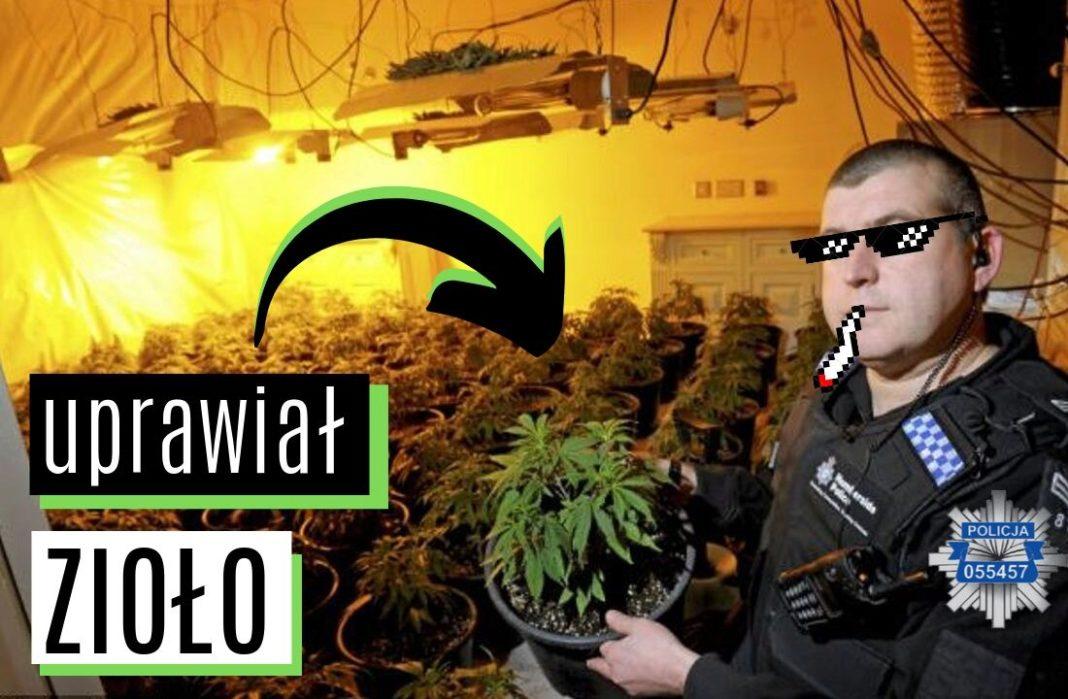 Jastrzębie Zdrój - Policjant został aresztowany za uprawę marihuany i handel