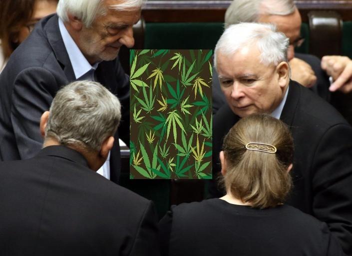 Legalizacja marihuany PiS. Nowa Sól