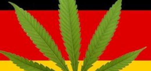 Rząd Angeli Merkel poważnie dyskutuje o wprowadzeniu legalizacji marihuany