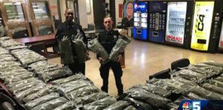 Policjanci myśleli, że to marihuana i przejęli 48 kilogramów suszu CBD!