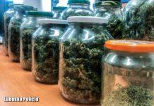 1,5 kilograma marihuany w słoikach woj. lubuskie