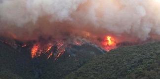 10 procent od sprzedanego towaru – tyle zaproponował diler na ratowanie strawionej przez pożary Australii. Ratować zniszczony przez ogień kontynent postanowił australijski diler. Jego charytatywna akcja zrobiła w sieci furorę.