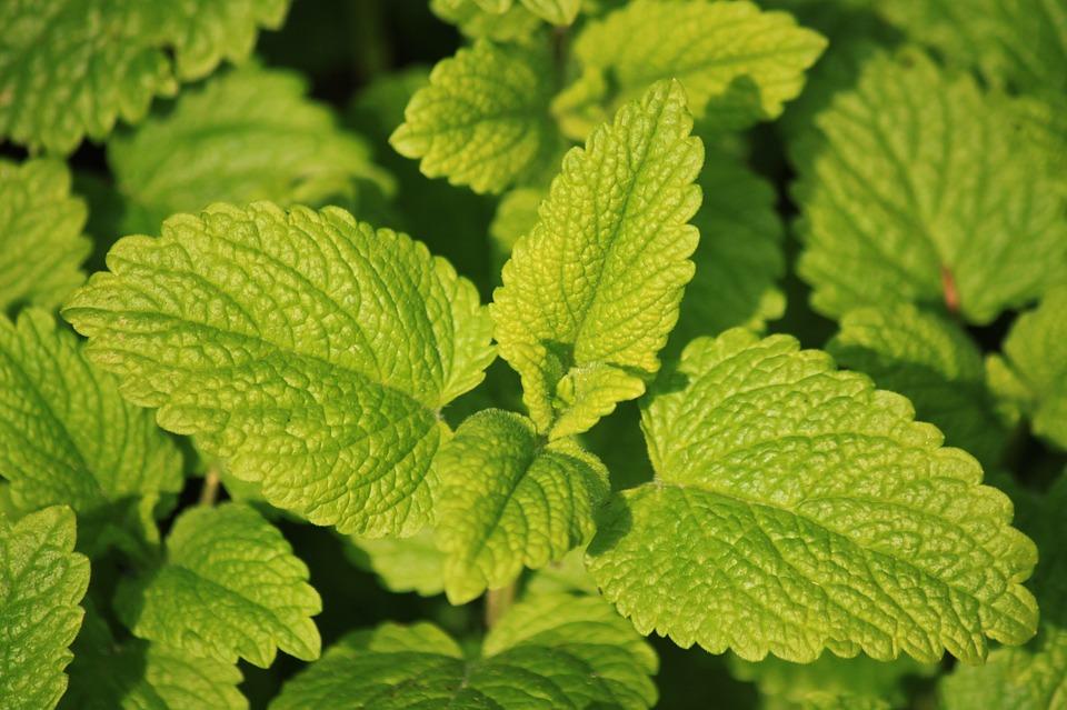 Jakie zioła waporyzować?