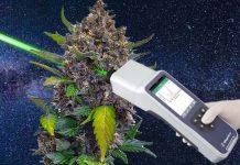 Robi to ze stuprocentową poprawnością. Potrafi ustalić, czy badana roślina to konopie włókniste czy też marihuana. Specjalistyczny laser Raman Spektrometr (RS) to innowacyjne urządzenie przetestowane przez zespół naukowców Texas A&M University.
