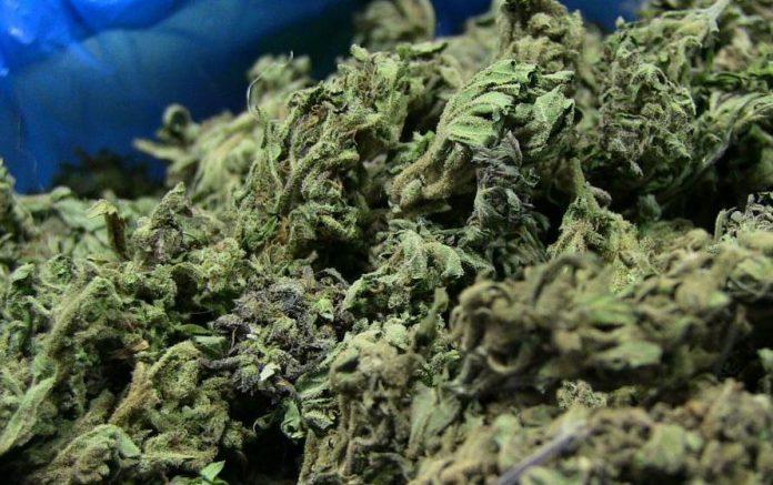 Naukowcy odkryli tetrahydrokannabiporol czyli THCP. Kannabinoid wyizolowany z konopi indyjskich może być 30 raz sileniejszy od THC! THCP pochodzi od włoskiej odmiany marihuany medycznej FM2 hodowanej jedynie przez armię.