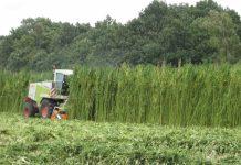Sprawdzają się w przemyśle, rolnictwie i medycynie. Z upływem czasu odkrywanych jest coraz więcej walorów i możliwości zastosowania konopi. Ta branża w Polsce jednak rozwija się zbyt wolno i nadal tak będzie, jeśli nie odrzuci się stereotypowego myślenie. Nadzieją na przyszłość konopnego rynku nad Wisłą może być jednak ostatnie stanowisko podkomisji ds. biogospodarki i innowacyjności w rolnictwie.