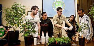 To będzie zupełnie nowy kierunek studiów. Już jesienią na Uniwersytecie Stanowym w Colorado-Pubelo edukację rozpoczną pierwsi studenci, którzy będą mogli zdobyć tytuł magistra marihuany.