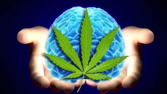 Według najnowszych badań THC może mieć wpływ na tworzenie tak zwanych fałszywych wspomnień. Przeprowadzili je naukowcy z wydziału psychologii i neuronauki Uniwersytetu Maastricht w Holandii. Przeprowadzili eksperyment na dwóch grupach ludzi.
