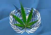 Na razie marihuana wciąż jest klasyfikowana jako substancja niebezpieczna dla zdrowia i bezużyteczna. Chociaż już w zeszłym roku miało się odbyć głosowanie nad klasyfikacją konopi to przeniesiono je na marzec tego roku. Podczas obrad 63. Komisji ds. Środków Odurzających w Wiedniu głosowanie się jednak nie odbyło. O klasyfikacji marihuany zdecydować ma dopiero w pod koniec 2020 roku ONZ.