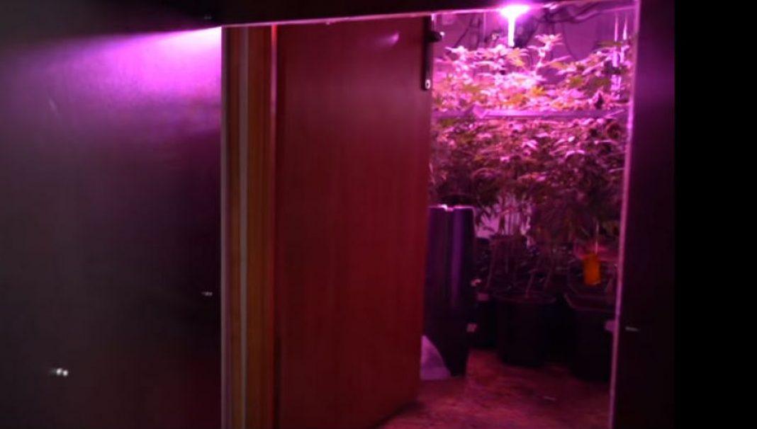 Właściciele tej plantacji marihuany mieli naprawdę baśniową wyobraźnię rodem z Krainy Narnii. 41 letnia Anna T. wraz z 23 letnim synem Adrianem uprawiali 1400 roślin konopi indyjskich. Do plantacji wchodziło się przez szafy niczym do świata Narnii.