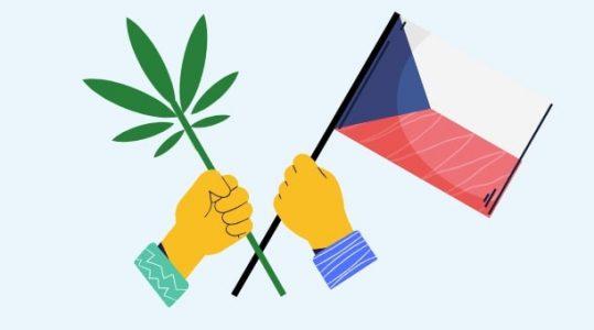 Czy marihuana w Czechach jest legalna?