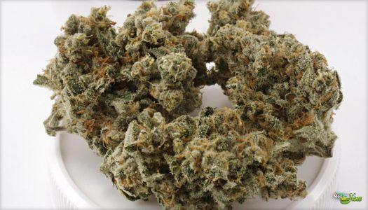Trainwreck, czyli hybrydowa odmiana marihuany, swoją popularność zyskała dzięki niezwykle silnym efektom działania. Jest to jedna z najczęściej wybieranych odmian pochodzących z kalifornijskiej miejscowości Arcata – jednego z miejsc, gdzie wzrastają najwyższej klasy odmiany marihuany. Dominującym rodzajem konopi w tej odmianie jest Sativa.