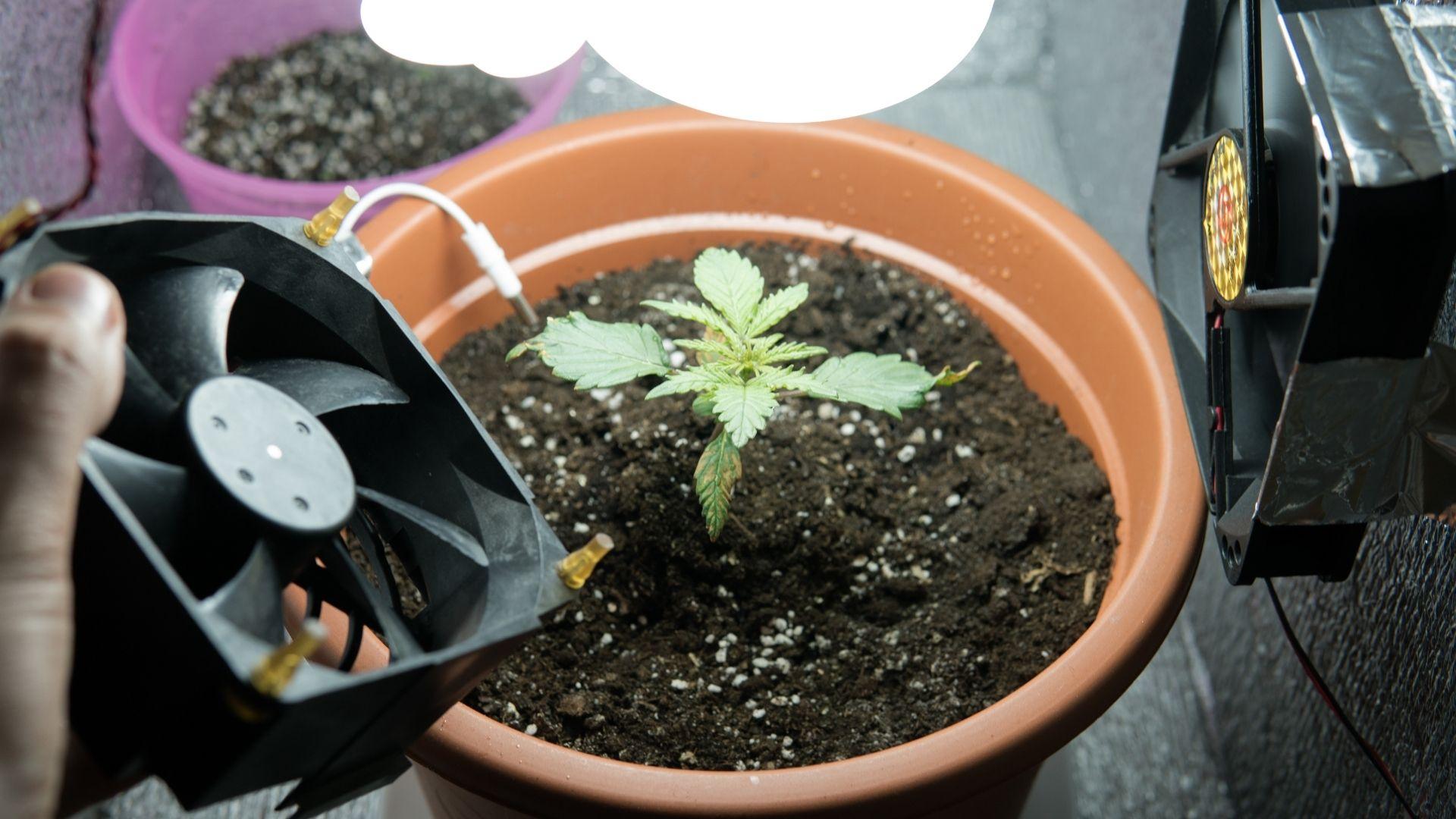 Growshop - sklep dla każdego milosnika uprawy marihuany