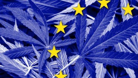 Trybunał Sprawiedliwości Unii Europejskiej uznał, że państwa członkowskie nie mogą zakazywać sprzedaży pozyskanego legalnie kannabidiolu CBD. Powód? Z konopi kojarzących się wyłącznie z używką zawierającą psychoaktywne THC, można także wytwarzać kosmetyki, suplementy i żywność. Poza tym CBD nie stwarza zagrożenia dla zdrowia.