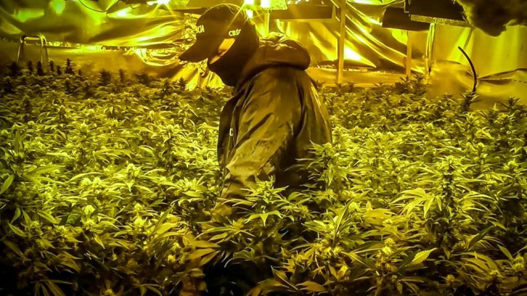 Obydwie plantacje marihuany, które pod Warszawą uprawiali Wietnamczycy były profesjonalnie wyposażone. Krzewy konopi indyjskich były ogrzewane i doświetlane sprzętem z najwyższej półki, zasilanym kradzionym prądem.