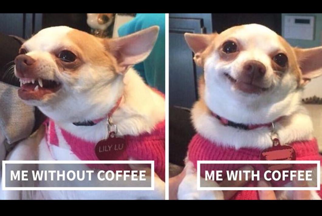Kawa z CBD na pobudzenie