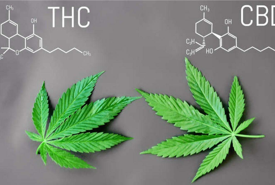 Różnica między CBD a THC