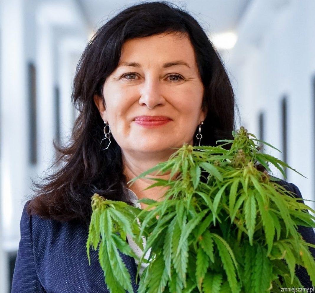 Tegoroczny dzień marihuany w Polsce jest wyjątkowy. Wszystko za sprawą symbolicznego złożenia we wtorek (20 kwietnia) pakietu ustaw konopnych przez Parlamentarny Zespół ds Legalizacji Marihuany. Projekty ustaw 4/20 przewidują nie tylko regulacje dotyczące dekryminalizacji marihuany, ale także uprawę konopi indyjskich dla celów medycznych oraz udogodnienia prawne dla uprawy konopi siewnych na potrzeby przemysłu.