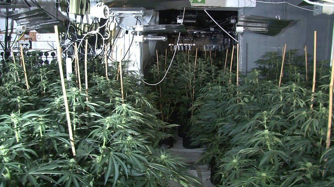 Profesjonalny sprzęt, tysiące krzewów konopi indyjskich, a wszystko na czterech piętrach magazynu w centrum Manchesteru. Tak ogromną plantację marihuany odkryli i rozbili funkcjonariusze Greater Manchester Police.