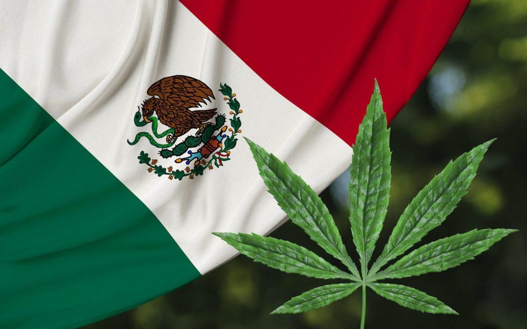 Depenalizacja marihuany w Meksyku stała się faktem. Sąd Najwyższy zdecydował, że osoby dorosłe mogą rekreacyjnie używać marihuany. Decyzję przegłosowało ośmiu z jedenastu sędziów.